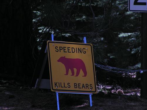 Red Bear = Dead Bear