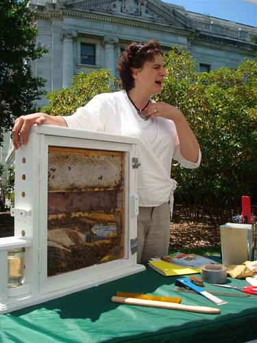 Toni Burnham brought an observation hive to observe bees inside it in action.