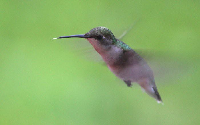 06-18-humming2