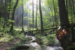 creek (**MIKA**) Tags: creek mühle bach wald gera märchenwald morgennebel morgenlicht mosen elster greiz wünschendorf fuchsbach märchenspiele endschütz fuchstal fuchsmühle