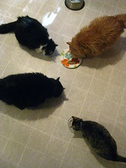 "Cats enjoying cat food birthday ""cake"""