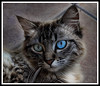 Draganized cat (AliciaBruG) Tags: cat gato dragan draganized draganizer accióndraganizer
