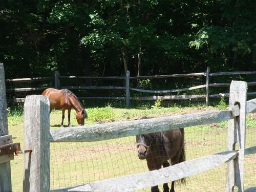 Tiny Ponies