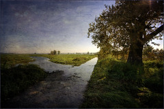 zalana droga / flooded road ((:Andrzej:) - very little time -sorry) Tags: road sun tree texture water field landscape flood pole droga woda soce canonefs1022 lubuskie krosnoodrz 101010 magicunicornverybest