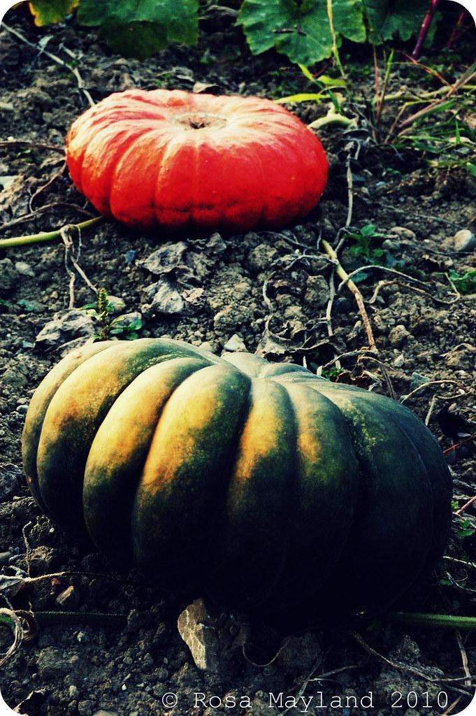 Halloween 3.1 bis