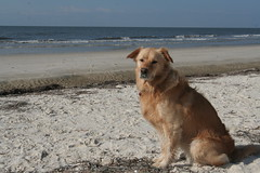 Family_Alligatorpoint_20101024_137 (dougflyer) Tags: familybeach