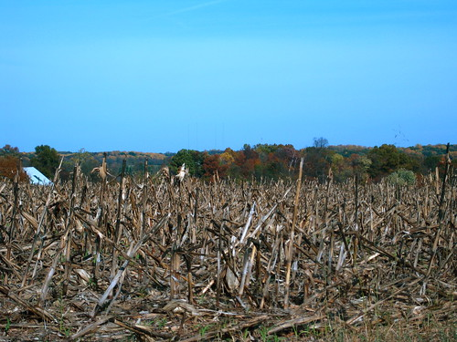 Cornfield and Colors