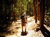 In eucalyptus forest  / W eukaliptusowym lesie (raphic :)) Tags: caminodesantiagodecompostela