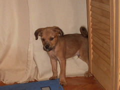 Hunde - 60 (Manfred Lentz) Tags: pets dogs puppy pups puppies hunde littledogs welpen hndchen babydogs whelps