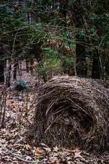 Misc. Outdoors-48.jpg (Drew Rampley) Tags: brown rough winter woods bale dark hay old sticks straw