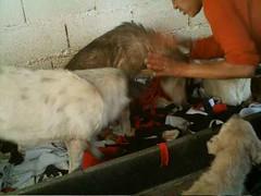 Doação de cobertores aos cachorros do Jardim