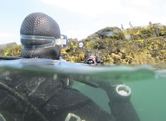 photo opportunity (squeezemonkey) Tags: camera light divers underwater surface anglesey ynysseiriol puffinisland holborndiver