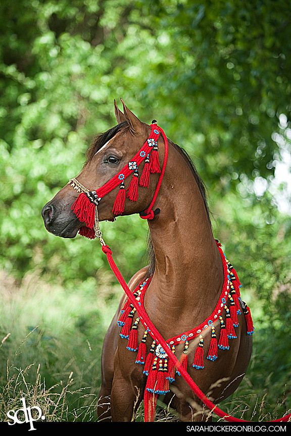 XClanton Performance Horses equine farm shoot