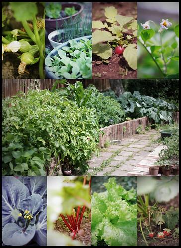 Francis' garden...