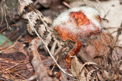 fungus on fungus