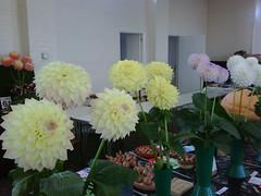 BDHS Autumn Flower Show, 2009 (Alwyn Ladell) Tags: flowershow bdhs bournemouthanddistricthorticulturalsociety edmundcampionchurchhall