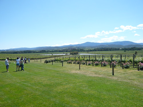 A Stunning Day for Yarra Valley Wine