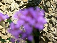 (Damien Clauzel) Tags: macro fleurs geotagged pierre jardin ville