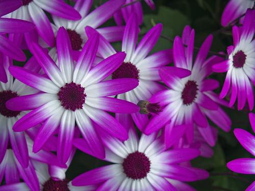 Sitka Flowers