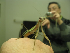 IMG_9451 (tend2it) Tags: usa green bug mantis insect praying