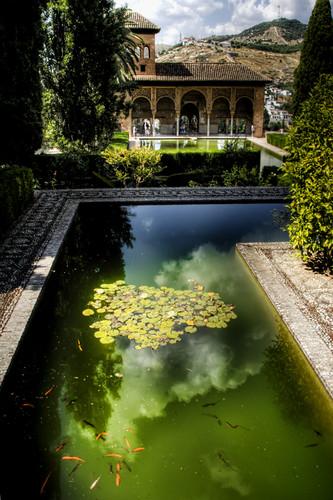 Partal gardens. Alhambra. Granada. Jardines del Partal.