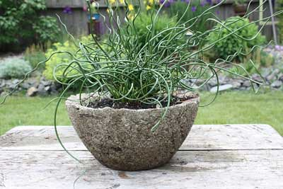 Hypertufa Planter with Curly Grass