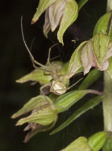 orchidées et araignées - Page 3 4786434849_8a2ffa2400