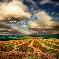 Endless view (Katarina 2353) Tags: landscape nature paisaje sky blue clouds cielo sunflower fields sunset beautiful beska srbija serbia europe golden valleys flowers wallpapers green view endless hills trees backgrounds colors katarina stefanovic 2353 vojvodina beauty agriculture views equilibrium joy peace harmony large vajdasag priroda art film photo wallpaper light life adventure nikon travel gettylicence geotagged tjkp katarina2353 katarinastefanovic photography flickr image pejza paysage