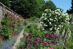 Mottisfont Abbey & Gardens (Mark Wordy) Tags: roses english gardens rosa hampshire nationaltrust flowergarden mottisfontabbey oldfasionedroses nationalcollection