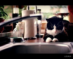 Domestic Entertainment (L|O|R|G) Tags: family cats film water kitchen 35mm sink watching analogue campino smcpm50mmf17 ricohkr10x paradiesweltaction