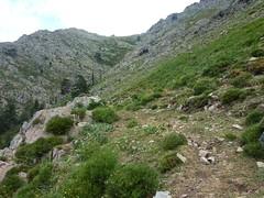 Descente de Puscaghja à Monte Estremu : sentier de montée de Puscaghja à Caprunale