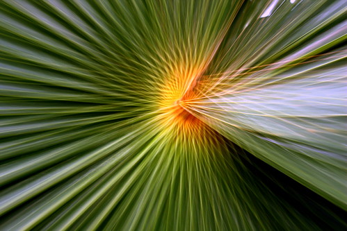 Palm leaf zoom by Esther Moliné