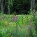17 - 16 juillet 2010 Milly-la-Forêt Visite de la maison de Jean Cocteau Au-delà du jardin