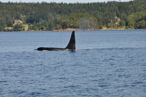 Whale Watching 14