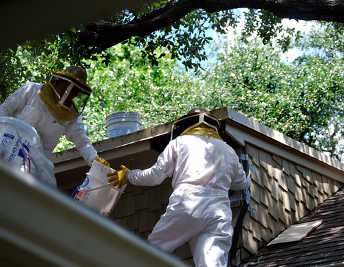 Bee removal guys on the roof