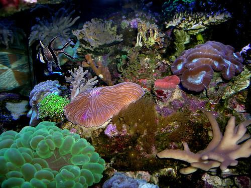 reef top 2- DSCN0546