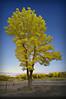 A Sunken Garden Fantasy (rardstar) Tags: trees tree nature garden ir philippines best september winner infrared sunken semana 19th setembro 2010 muntinlupa d90 19ª kintall