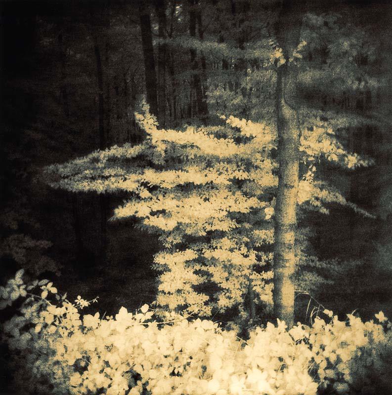 grove 10