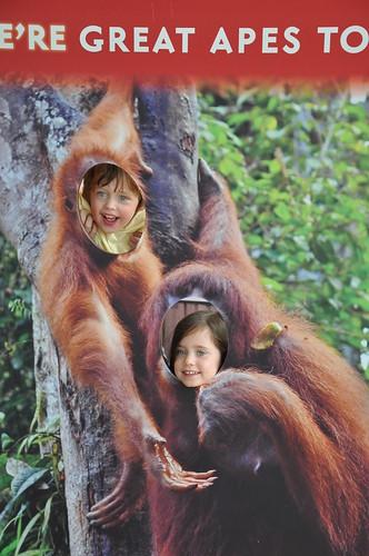 Who's a monkey?