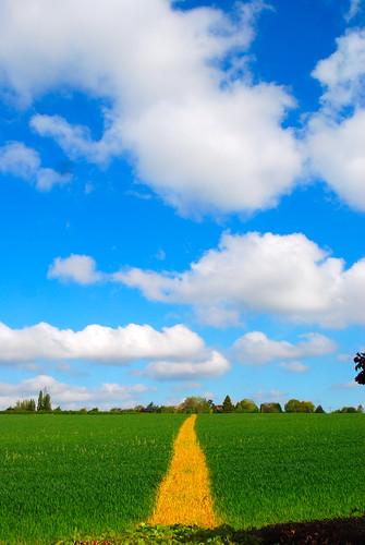 Follow the Yellow Brick Road.....