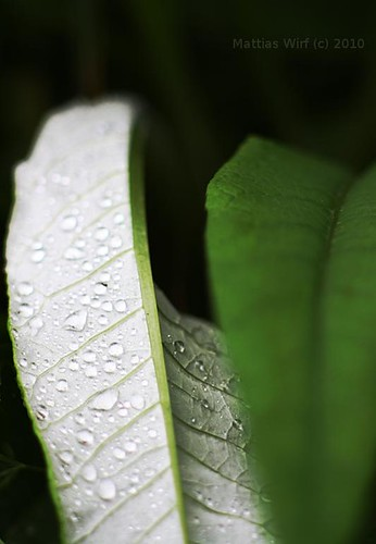 Bending leafs
