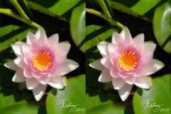 4849660599 b953db5687 m Nuevos estereográmas o imágenes en 3D