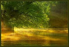 Misty Magical Morning (hvhe1) Tags: morning light mist holland tree green leave nature water netherlands misty fog creek sunrise gold bravo groen ray searchthebest ripple reserve boom swamp marsh magical damp biesbosch wetland goud supershot hvhe1 hennievanheerden