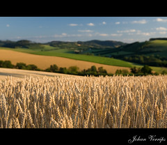 Scenery near Meschede, germany (Johan Verrips) Tags: summer nature germany scenery dof meschede sauerland hennesee zomervakantie supershot topshots mywinners theunforgettablepictures natureselegantshots herhagen