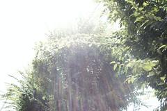 町田樹 画像43