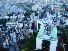 Tokyo 2010 - 芝公園 - 東京タワー(5)