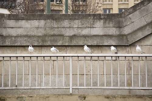 Birds by the Seine, Paris