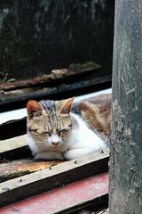 IMG_0478 () Tags: taiwan taipei    taipeicounty   houtong    catvillage rueifangtownship houtongcatstreet