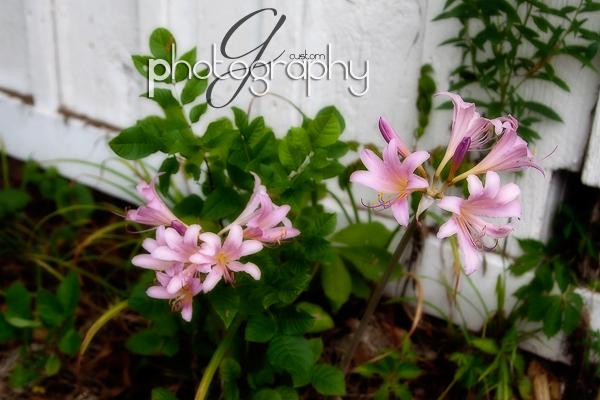Aug042010_0030