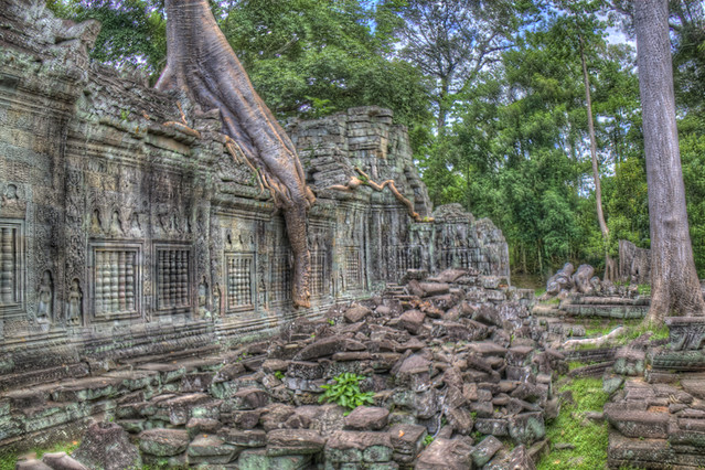 Angkor Wat Tree Wall in HDR